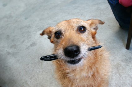 dog with pencil